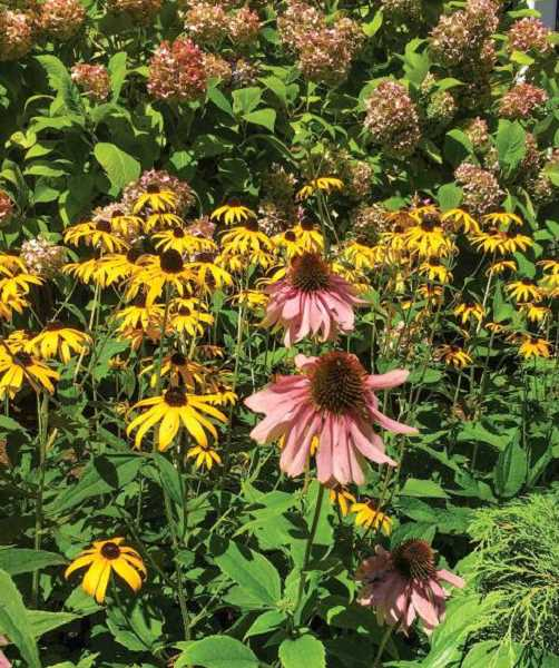 How to keep gardens safe in summer heat waves