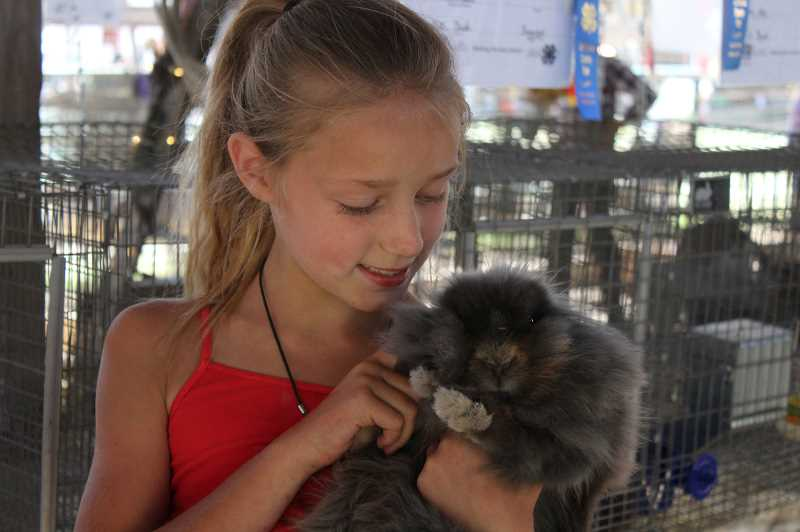 HOLLY SCHOLZ/MADRAS PIONEER - Nine-year-old Rebel Raisers 4-H club member Emmah Call pets her lionhead bunny during the Jefferson County Fair last week. This is Emmah's second year in 4-H.