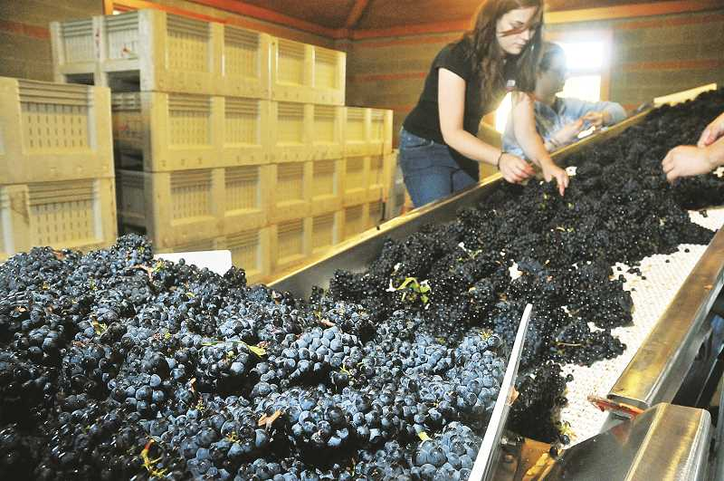 PMG FILE PHOTO - The European Union has announced that wines produced in the Willamette Valley will receive new protection under its Protected Geographical Indication (PGI) program.