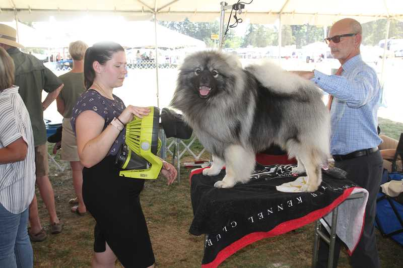 PMG PHOTO: JUSTIN MUCH - Groomin' time: Rose City Classic 2021 dog show took place on the St. Paul Rodeo grounds July 28 through Aug. 1.