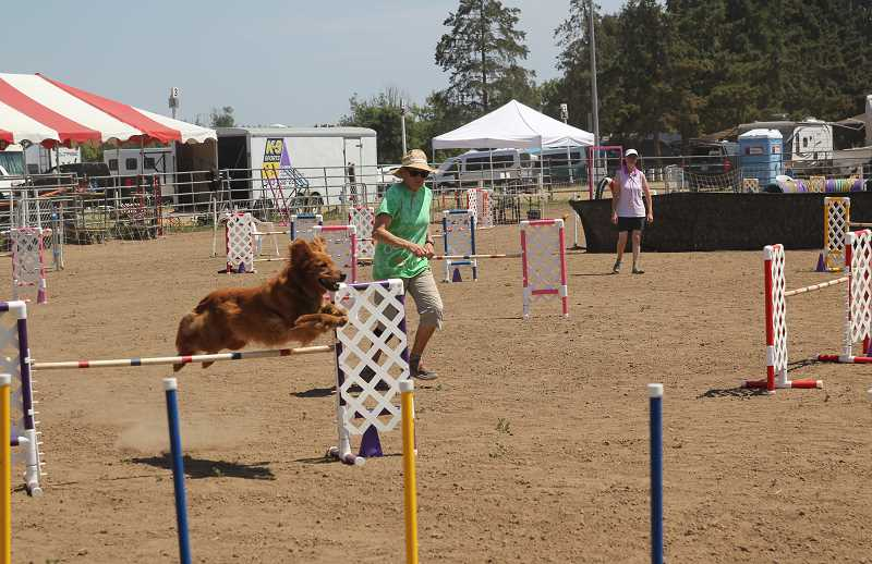 PMG PHOTO: JUSTIN MUCY - Torching the course: Rose City Classic 2021 dog show took place on the St. Paul Rodeo grounds July 28 through Aug. 1.