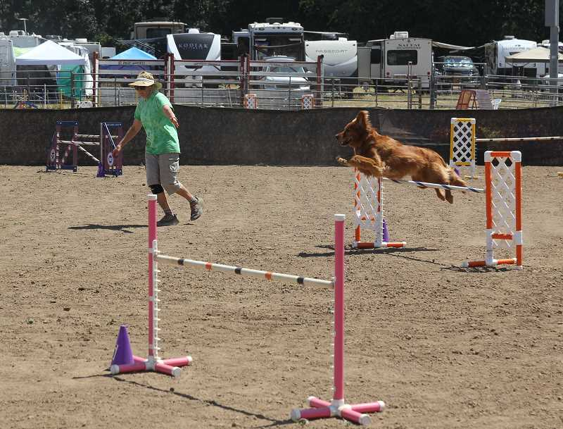 PMG PHOTO: JUSTIN MUCH - Time to soar: Rose City Classic 2021 dog show took place on the St. Paul Rodeo grounds July 28 through Aug. 1.
