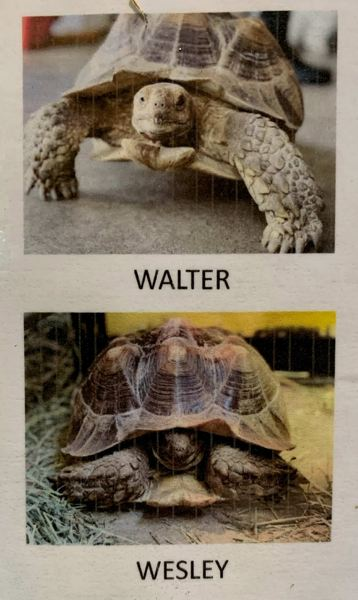 COURTESY PHOTO: CCSO - Walter and Wesley are brothers who reside at Critter Cabana.