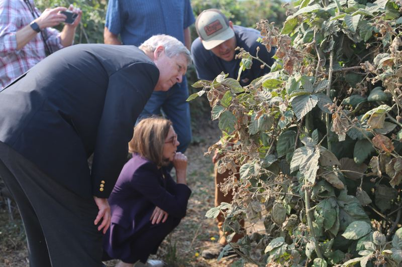 COURTESY PHOTO: GOVERNOR'S OFFICE - Willamette Valley farmers showed U.S. Agriculture Secretary Tom Vilsack and Gov. Kate Brown plants damaged by excessive heat. Vilsack said the federal government would have to step up to help states overcome agriculture challenges.