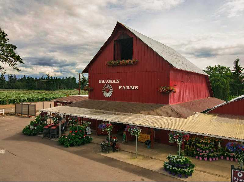 COURTESY PHOTO: BAUMAN FARMS - Bauman Farms of Gervais offers a wide variety of plants, produce and various delectables. Its cider was recently recognized as tops among small producers by the Great Lakes International Cider & Perry Competition.