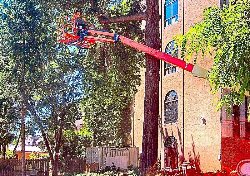 RITA A. LEONARD - A tall aerial lift places a workman with a chainsaw into the largest fir tree to be removed for the new parking lot, just north of the Portland Memorial Mausoleum.