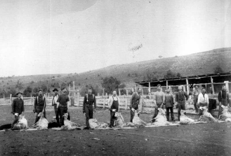 PHOTO COURTESY OF BOWMAN MUSEUM  - Sheep shearers take a break for a photo at Williamson Plant in 1900.