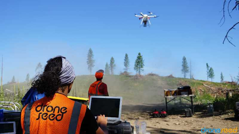 COURTESY PHOTO: DRONESEED - A DroneSeed plot watches a DroneSeed drone planting saplings. The company recently bought a seed company Silvaseed so it would have better access to plantings and speed up the reforestation process.