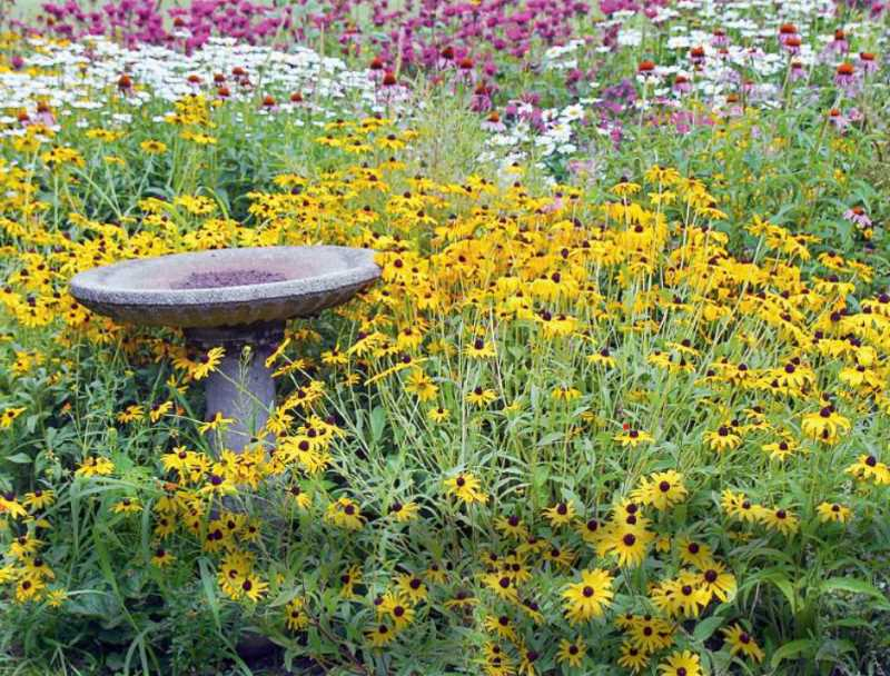 Helping your flowers withstand heat waves