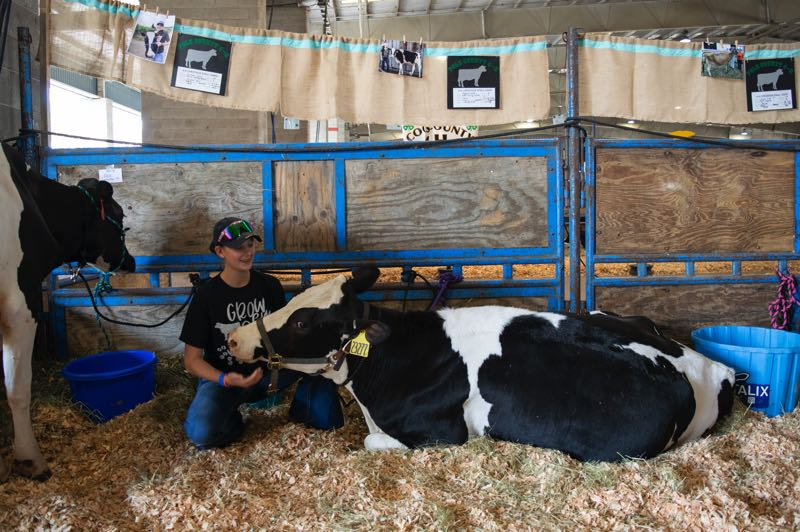 PMG PHOTO: SALLY SEGAR - Morgan Smith from Dallas sits with her dairy cow, Fern. It is her first time showing dairy cattle ever and her first time at the Oregon State Fair with large animals.
