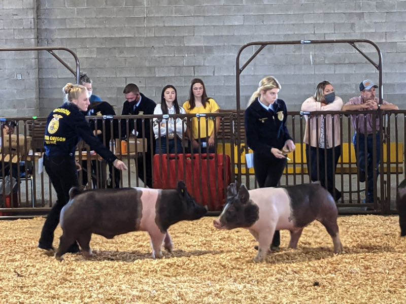 PMG PHOTO: JOSEPH GALLIVAN - On opening day at the fair, 4-H students parade their pigs in competition.