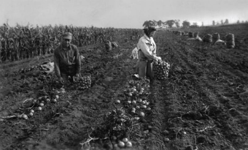 COURTESY PHOTO - The aunt and uncle of Pamela Loxley Drake work in a field, picking potatoes, in an old photograph from her family collection.