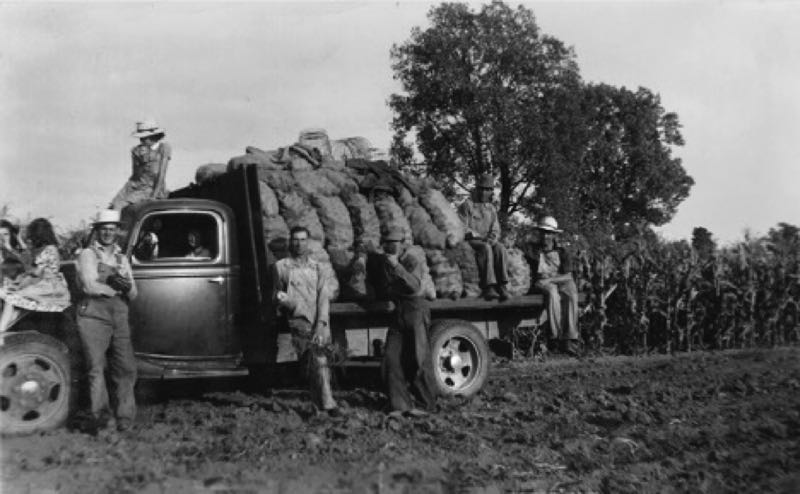 COURTESY PHOTO - Men load up the farm truck with sacks of potatoes in a historical photograph from a family collection.