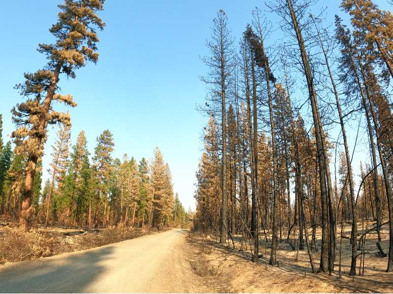 COURTESY PHOTO: STEVE RONDEAU - A view of the Black Hills region of the Fremont-Winema National Forest shortly after the Bootleg Fire. The left side of the road was prescribed a controlled burn while the the right side of the road was not.