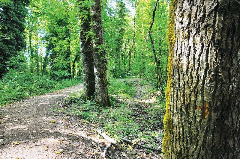 PMG FILE PHOTO - In July the Chehalem Park & Recreation District commissioned a telephone survey of Yamhill County residents to get a picture of what they want for future trail and recreational projects, including the controversial Yamhelas Westsider Trail.