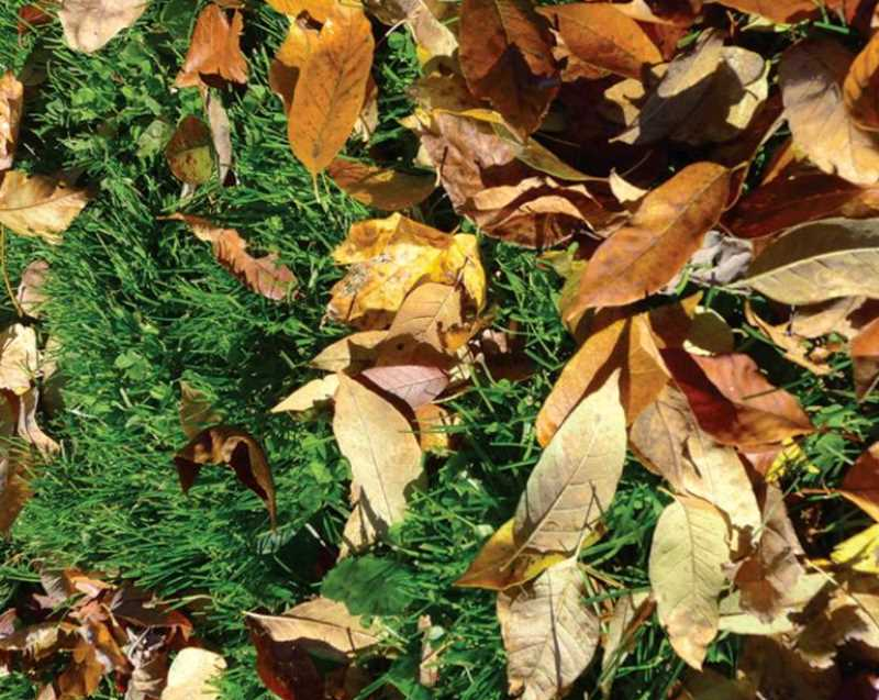 MULCHED LEAVES HELP YOUR LAWN