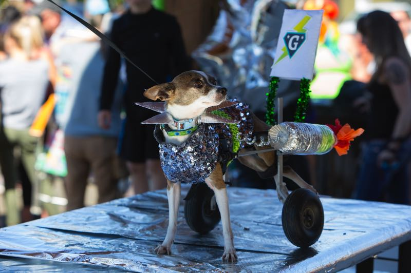 COURTESY PHOTO: UFO FESTIVAL - Humans and animals alike will be donning their best extraterrestrial costumes at the UFO Festival, Sept. 24-25.