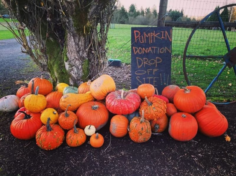 COURTESY PHOTO: VIRGINIA BORDEN - The drop-off site for pumpkin donations is located at 20975 S. Gould Court in Clackamas County.