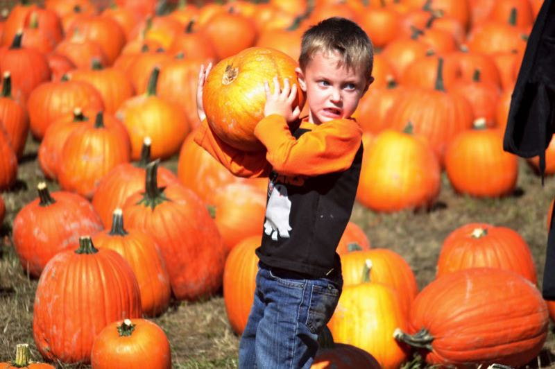 PMG FILE PHOTO - Pumpkins and more await visitors to Liepold Farms this month during the annual Fall Festival.