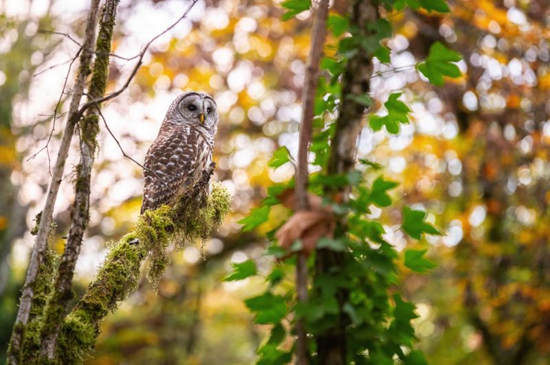 """COURTESY PHOTO - """"Owl"""" is one of four photos people can vote on in the plant and wildlife category."""
