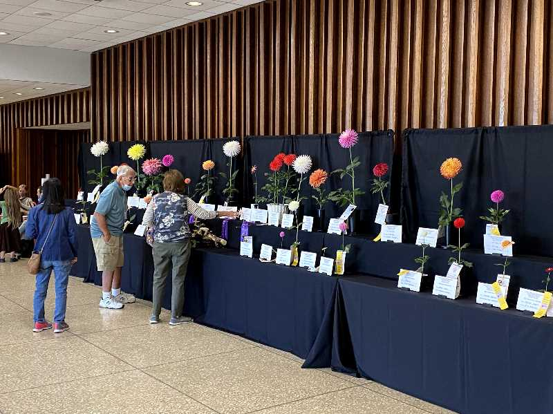 COURTESY PHOTO: MARK OLDENKAMP - Visitors browse the dahlia entries at the national dahlia show in Ohio.