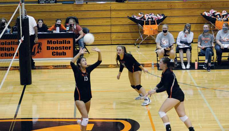 PMG PHOTO: KRISTEN WOHLERS - The Molalla High volleyball team picked up a pair of league wins that moved its Tri-Valley Conference record to 7-0 with two weeks to go.