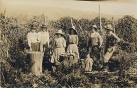 by: ESTHER BETTS GROSS Collection, Teens and young adults made extra money picking hops in the Willamette area in the early 1900s.