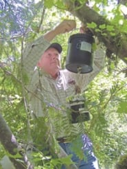 by: Submitted photo, Clackamas County Vector Control biologist George Cashdollar hangs a mosquito trap near the Clackamas River. Traps are checked again in 12 hours and mosquitoes are tested to identify vector species.