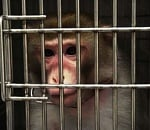 PETA sues for OHSU video of frightened monkey experiment