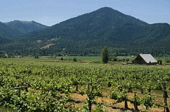 by: ERIC MORTENSON/CAPITAL PRESS  - Big change may be coming to the West Coast wine industry. A new report suggests 10 percent of wineries are strongly considering selling out in the next five years.