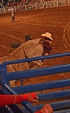 by: JOHN WILLIAM HOWARD - Scappoose resident Dave Weston takes a spill off his bull during competition on Saturday night.
