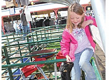 by: SUSAN MATHENY - Lizzy Friend, 6, interacts with her friend's Nigerian dwarf goat on Thursday at the 81st annual Jefferson County Fair.