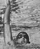 Photo Credit: NEWS-TIMES FILE PHOTO - Robb Bauer was a three-year state meet qualifier during his swimming career at Forest Grove, and he will be inducted into the school's Athletic Hall of Fame this fall.