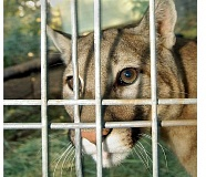 Photo Credit: GARY ALLEN - File photo / Newberg Graphic