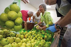 Photo Credit: TRIBUNE PHOTO: JONATHAN HOUSE - Oregon Food Bank volunteer Lynn Shaker helps sort apples for donation boxes. Groups and individuals as young as six can sign up for two-hour shifts at the food bank, doing everything from sorting and repacking to leading gardening or cooking classes.