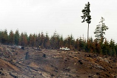Photo Credit: PAMPLIN MEDIA GROUP PHOTO: CHASE ALLGOOD - A lone firefighter monitors the perimeter of the Scoggins Creek Fire northwest of Hagg Lake Monday morning. Fire officials say the blaze, which scorched 400 acres, is virtually over and in the mop-up stage.