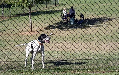 Photo Credit: POST PHOTO: KYLIE WRAY - The Bark for the Park event hopes to raise money to improve Sandy Bluff Dog Park.