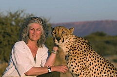 Photo Credit: COURTESY OF CHRISTOPHE LEPETIT - The Oregon Zoo hosts a Cheetah Conservation Fund event Oct. 5 with Dr. Laurie Marker (above with Chewbaaka).