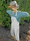 Photo Credit: SUBMITTED PHOTO - Scarecrows, pumpkins and more fun are part of what is planned this fall at Luscher Farms Childrens Garden.