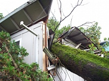 Photo Credit: COURTESY OF COLUMBIA RIVER FIRE & RESCUE - Multiple oak trees in St. Helens were toppled in the Saturday, Oct. 25, windstorm, including this tree that smashed through the roof of a home.