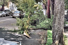 Photo Credit: DAVID F. ASHTON - Perhaps due to the then-dry weather, this limb easily failed when a delivery truck brushed against it in early autumn, bringing it down hard on the passenger car just behind, on S.E. 17th in Westmoreland.
