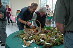 Photo Credit: ESTACADA NEWS PHOTO: ISABEL GAUTSCHI - Festival goers check out a mushroom display at the Estacada Community Center on Saturday, Oct. 25, during Estacada's annual Festival of the Fungus.
