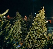 Local groups are trying to raise funds by selling Christmas trees this holiday season.