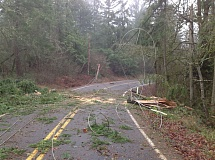 Photo Credit: COURTESY OF THE COLUMBIA RIVER PEOPLE'S UTILITY DISTRICT - Power lines were snarled on Neer City Road in Goble after strong winds took out electrical poles along the roadside.