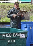 Photo Credit: ODFW PHOTO - Hatchery technician Charles Baker puts a coho salmon into a tote diestined for the Oregon Food Bank.