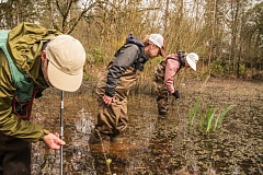 Photo Credit: PHOTO BY MICHAEL DURHAM, COURTESY OF OREGON ZOO - Volunteers search for amphibian eggs in a pond at Clackamas Community College, as part of a two-year survey. No Western pond turtles were found in 15 sites surveyed.