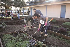 Photo Credit: LINDSAY KEEFER - Corban University students work with Woodburn School District employees to spread bark dust at the French Prairie/Lincoln community garden on Monday.