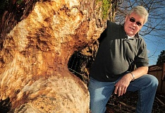 Photo Credit: TIDINGS PHOTO: VERN UYETAKE - Despite the tree damage caused by beavers in their neighborhood, residents like Mike Watters have formed a group to help educate the community about living with the animals.