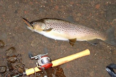 Photo Credit: SCOTT STAATS SPECIAL TO THE CENTRAL OREGONIAN - Large brown trout such as this one taken on a spinning rod can be caught in the Deschutes River this time of year.