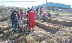 SUSAN MATHENY/THE PIONEER - Jefferson County Middle School students work to dig out weeds and terrace the sloped garden area with the use of straw bales.